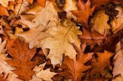 L'odeur des feuilles mortes